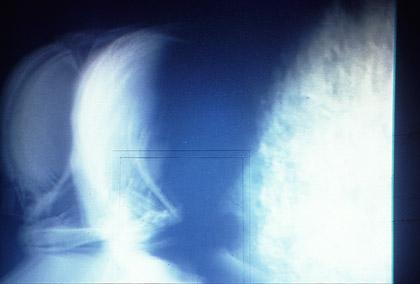 'Second Stage', 1995. Video still.